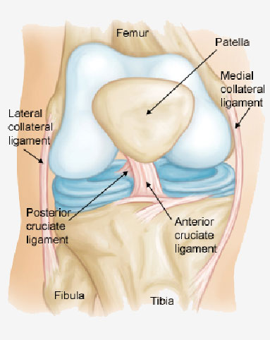 Anterior Cruciate Ligament Injury A1 Therapy Nantwich Sports Injury Sports Massage Clinic